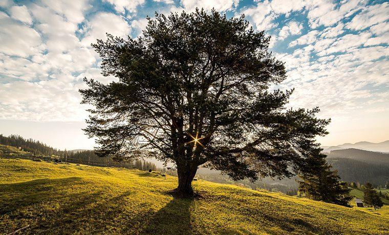 Sei wie der Baum